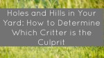 Holes and Hills in Your Yard: How to Determine Which Critter is the Culprit